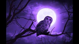 432hz Deep Sleep Music | Positive Energy Cleanse | Healing Miracle Music | Meditation Sleep Healing