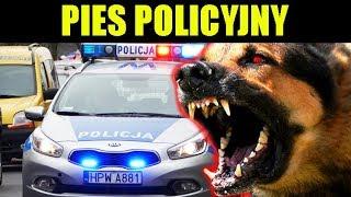 WARDĘGA vs PIES POLICJI I ANTYTERRORYSTÓW
