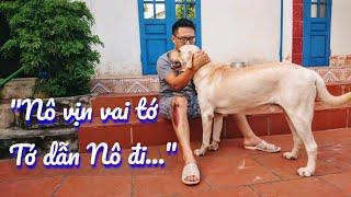 Nô gặp tai nạn - Cảm động khi có chú chó Củ Cải ở bên và giúp đỡ | My dog is help me to move