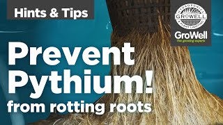 Preventing Pythium   Hints & Tips