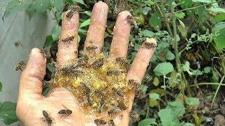 Как накормить пчёл со своей ладони - Пчелотерапия