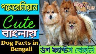 Pomeranian Dog Price In Bangladesh 免费在线视频最佳电影电视节目