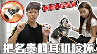 女友氣的要把狗狗賣掉, 球球把AirPod Pro咬壞了!