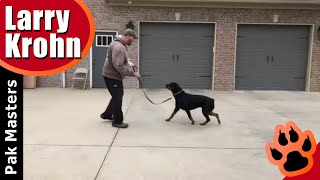 Rottweiler training / how to eliminate fear and anxiety