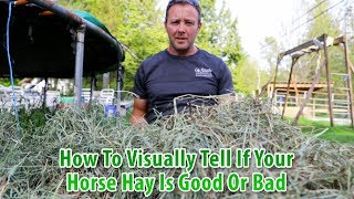 How To Visually Tell If Your Horse Hay Is Good Or Bad