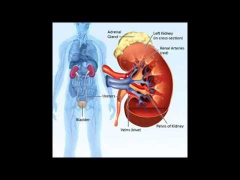 Instrument numérique de mesure de la pression sanguine et le pouls