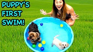 TEACHING MY PUPPY HOW TO SWIM!! - Video Youtube