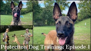 Teaching My Son To Train Protection Dogs Episode 1 | Malinois & Dutch Shepherd