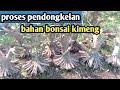Download Lagu bahan bonsai kimeng  proses pendongkelan Mp3 Free