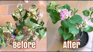 How to Bring A Plant Back To Life in 12 Hours