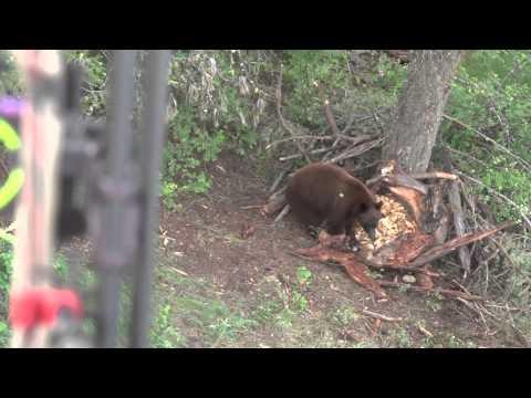 18 střel medvědů