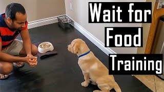 How to Train a Puppy or Dog to Patiently Wait for Food and Not Bark (Easy Training Tips)