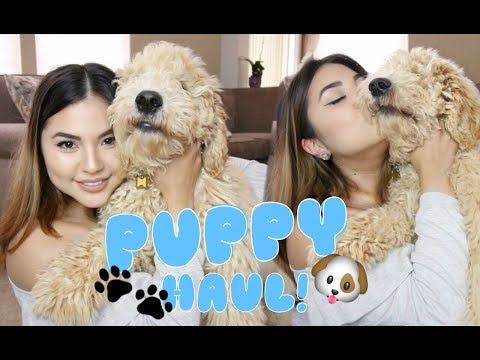 Puppy Haul! Goldendoodle Puppy!  | Homegoods + TJMaxx!