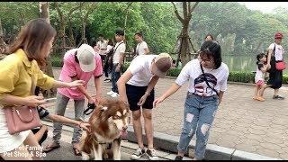 Mật Lên Phố Đi Bộ Làm Náo Loạn Vì Fan Vây Kín - Mật Pet Family