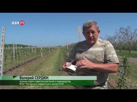 Об установке феромонных ловушек на территории Ростовской области