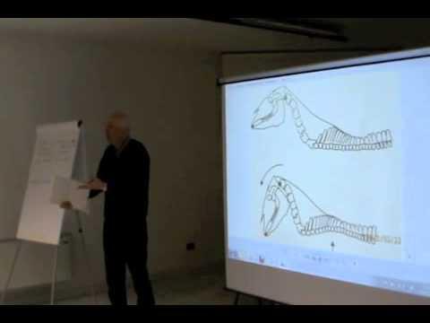 Osteochondrosis in un segmento l4-l5
