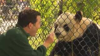 RMR: Rick And Giant Pandas