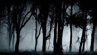 Frightening and Credible Bigfoot Report