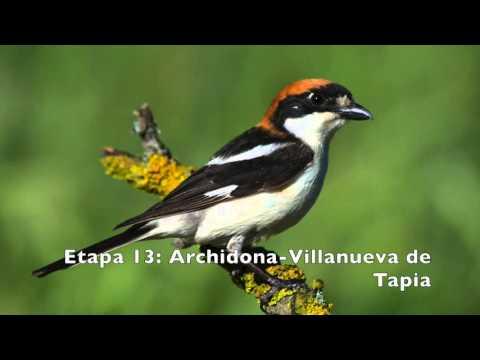 Vögel des Großen Weg von Malaga (GR 249). Die Schritte 10 bis 17