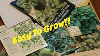 8 Herbs To Plant From Seed!