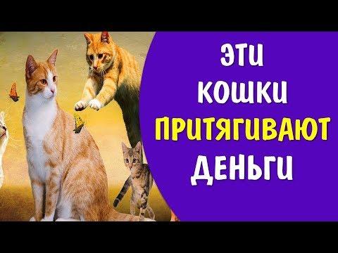 Цвет кошки притягивают в дом деньги счастье и любовь . Приметы о кошках | Эзотерика для Тебя Советы