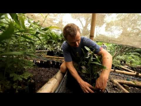 Permaculture Design Course for a Greener Future