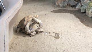 animales las tortugas se aparean