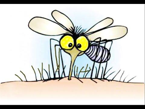 Vòng đời của muỗi và cách hút máu