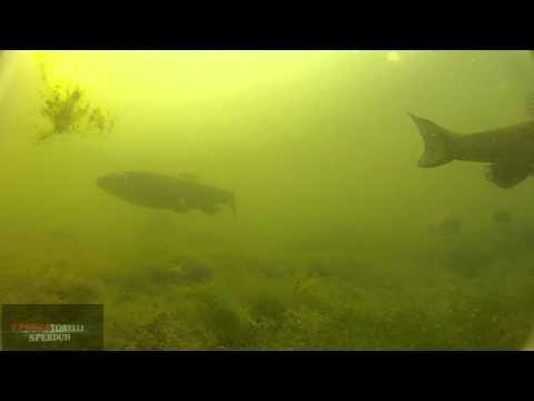 Ore per pesca di caccia di turismo