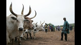 Nigeria: Can Conflict between Farmers and Herders be Resolved?