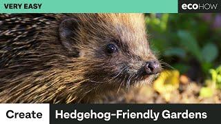 How to make your garden hedgehog friendly