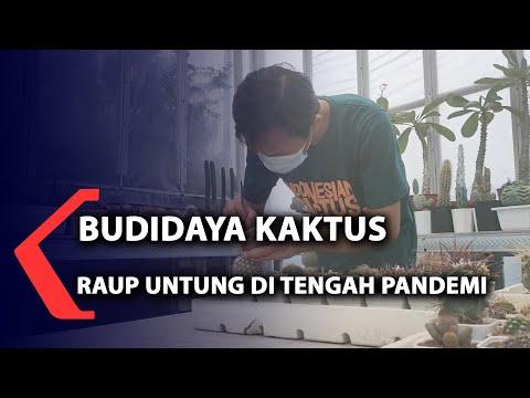 Budidaya Kaktus, Raup Untung Di Tengah Pandemi