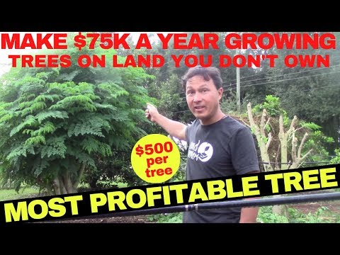 , title : 'Make $75,000 Growing this Cash Crop Tree without Owning Farm Land