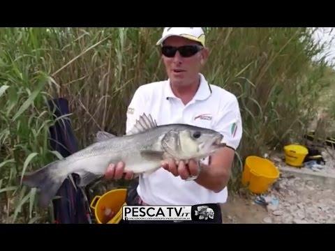 Zimniya che pesca su una pertica di una pertica di picca