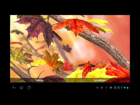 Video of Autumn Tree Live Wallpaper