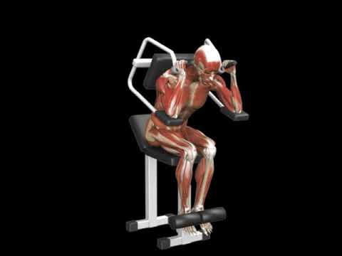 Seated Crunch (Lever)