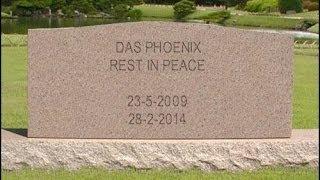 R.I.P. Das Phoenix
