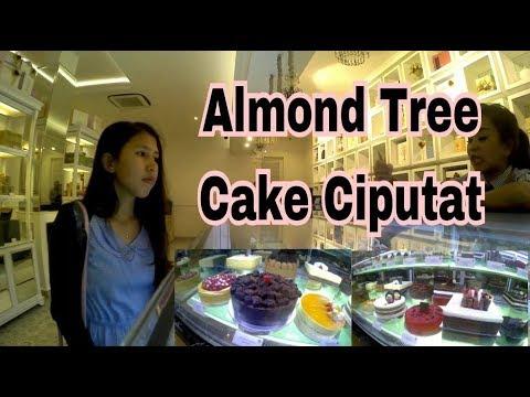 ALMOND TREE CIPUTAT