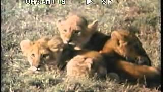 Cats: Caressing the Tiger Part 3