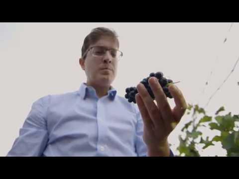 Vinhos de Minas Gerais premiados na Europa
