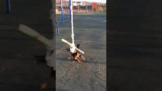 Собака бабака. Смешное видео. Смешные животные