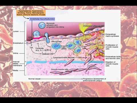 Presión arterial complejo seguimiento diario dong