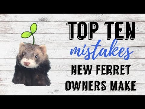 Top 10 Mistakes New Ferret Owners Make