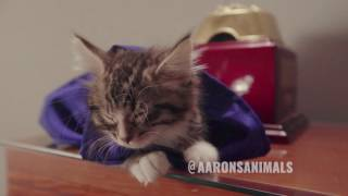 When Cats Make Movies - Video Youtube