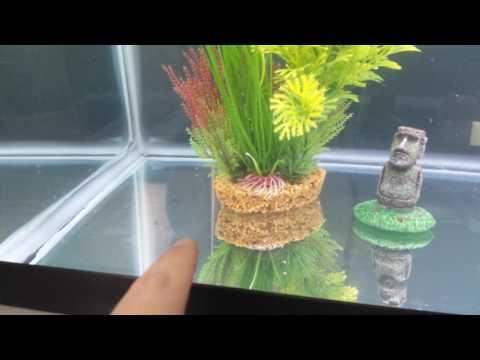 REVIEW – Aqueon LED 20 Aquarium Kit (Fish Tank)
