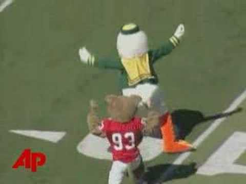Oregon Ducks vs. Houston Cougars mascots. Ding-ding!