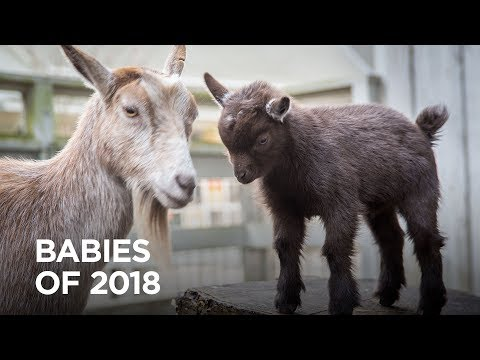The Cutest Zoo Babies of 2018