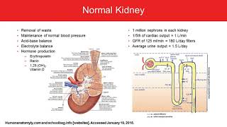 Understanding and Protecting the Kidney: Identifying Patients at High Risk for Kidney Failure