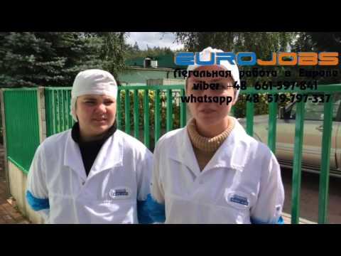 Работа на птицефабрике в Польше. Отзывы, условия работы и жилья EuroJobs