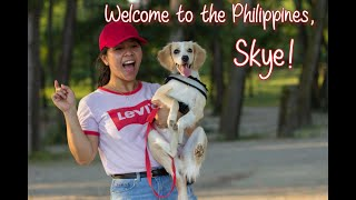How to bring your dog to the Philippines